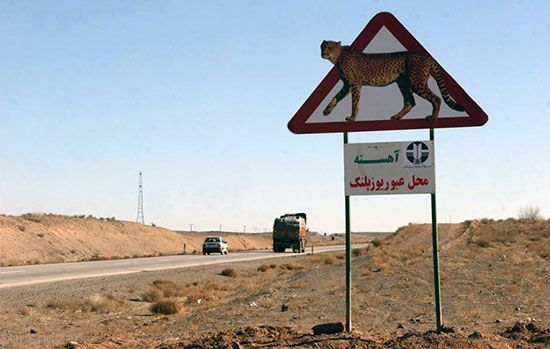 چند یوزپلنگ ایرانی باقیمانده است؟