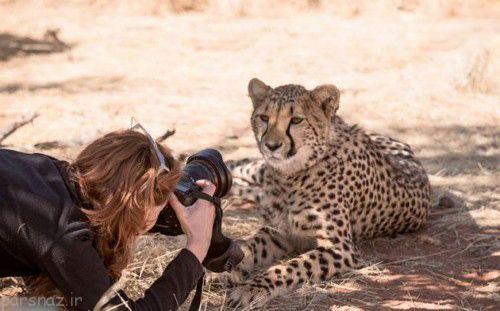 دوستی جالب یوزپلنگ با زن جوان گردشگر