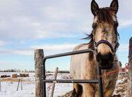 اسب ها هم حرف می زنند