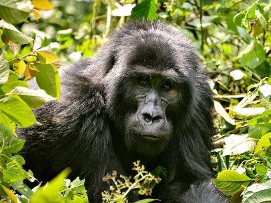 بازدید از آفریقا برای علاقمندان حیات وحش