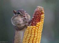 عکس های خنده دار حیوانات را ببینید
