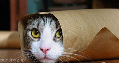 گربه ها ناقل این بیماری ها هستند