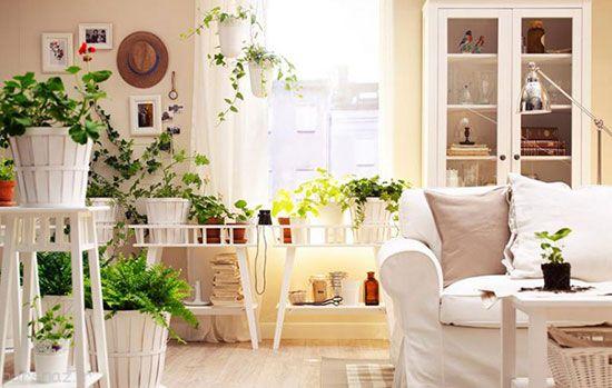 این گل ها هوای خانه شما را تازه می کنند