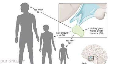 افزایش هورمون رشد با این روش ها