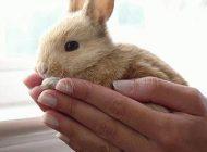 با خرگوش ها اینگونه ارتباط برقرار کنید
