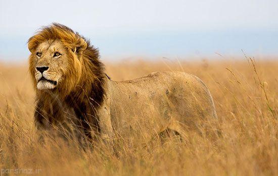 15 حیوان خطرناک و مرگبار دنیا را بشناسید