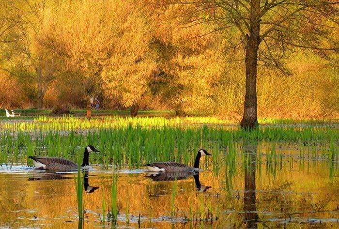 وداع با تابستان عکس های طبیعت پاییزی