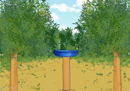 برای پرنده ها حمام بسازید