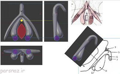 آموزش جنسی سه بعدی به دانش آموزان در اروپا