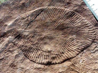 نشانه هایی از اولین موجودات زنده زمین