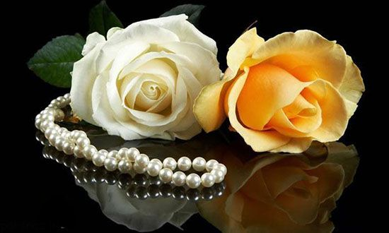عکس گل رز عاشقانه زیبا و دلنواز