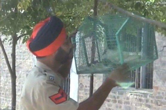 کبوتر جاسوس پاکستان به دام افتاد