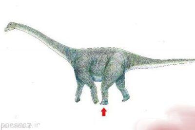ردپای دایناسور غول پیکر را ببینید