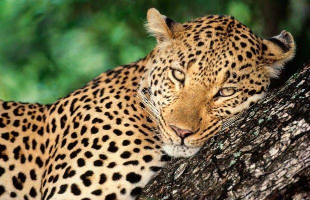 حیوانات قاتل و خطرناک دنیا را بشناسید