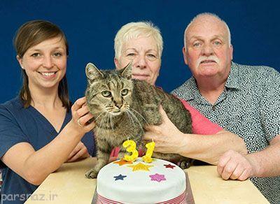جشن تولد برای پیرترین گربه دنیا