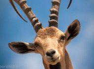 عکس های این حیوانات که در آستانه انقراض هستند