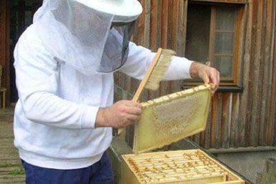 تولید عسل بدون زنبورها در ایران