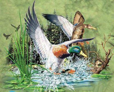 تست هوش تعداد اردک ها جالب