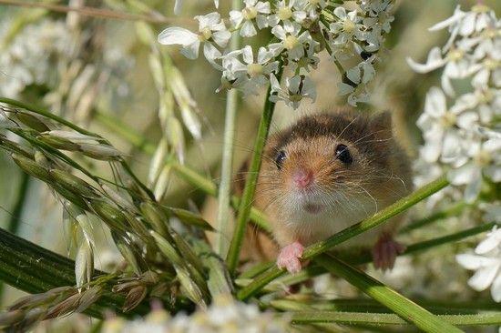 تصاویر برگزیده از حیوانات و پرندگان مسابقه عکاسی