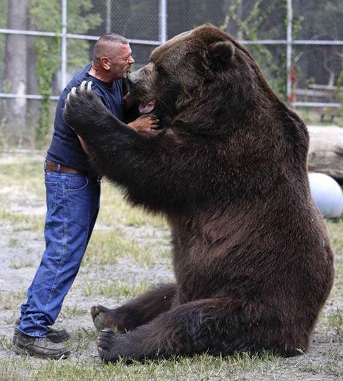 دوستی جالب انسان و خرس غول پیکر +عکس