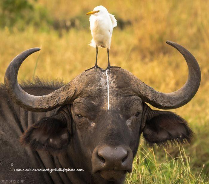 گالری عکس حیوانات وقتی کارهای بامزه می کنند