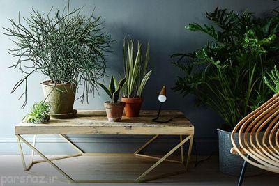 این گیاهان زندگی شما را با نشاط می کنند