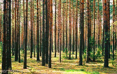درختان و گیاهان با هم حرف می زنند
