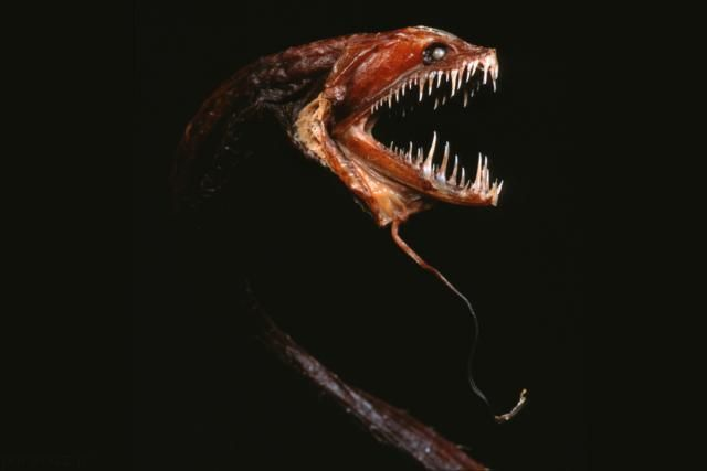 عکس های هولناک ترین جانوران جهان