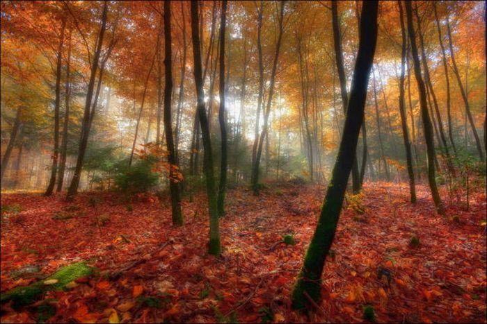 زیباترین عکس های پاییز فصل زیبایی رنگ ها