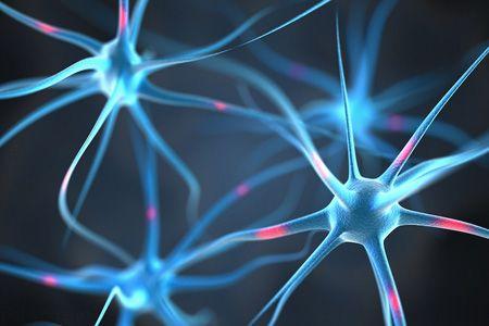 رابطه هوش و اندازه مغز بین جانداران