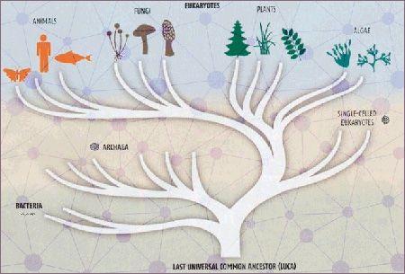 نگاهی به تکامل موجودات تک سلولی تاریخ