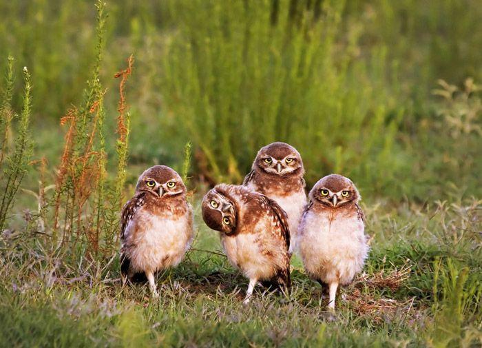 عکس های خنده دار از حیوانات با مزه طبیعت