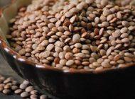 عدس منبع مغذی مواد مورد نیاز بدن