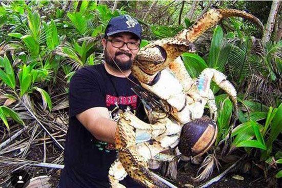 خرچنگ های سارق غول پیکر را ببینید