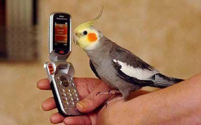 اینگونه به طوطی حرف زدن بیاموزید
