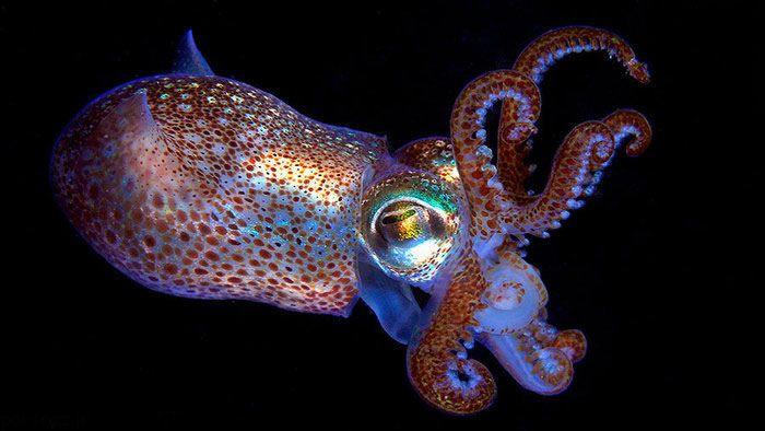 تصاویر دیدنی از حیوانات زیبا و حیرت انگیز جهان