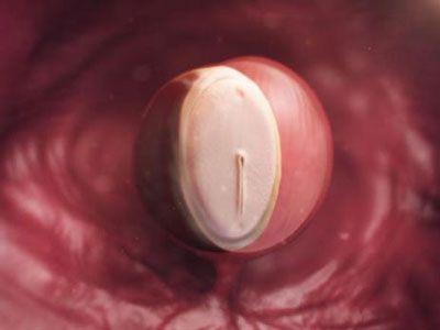 وضعیت رحم و جنین در هفته چهارم بارداری