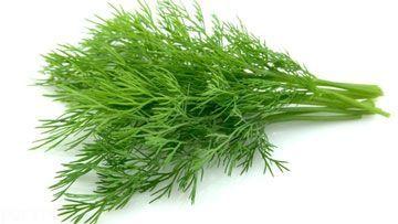 خواص دارویی گیاه شوید را بشناسید