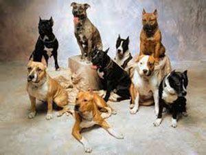 حکم اسلام درباره نگهداری سگ در خانه