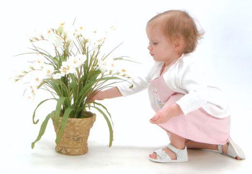 کودکان را از این گیاهان مضر دور کنید