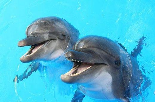 حیوانات هنگام صحبت با هم چه می گویند؟