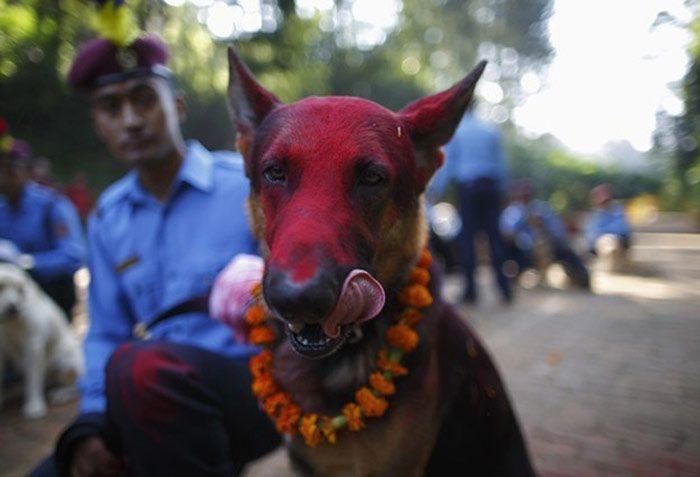 عکس های جالب از فستیوال سگ ها هندوستان