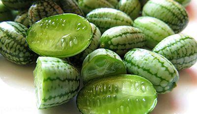 خاصیت های درمانی هندوانه ابوجهل