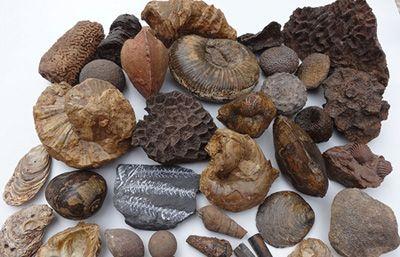 انواع مختلف فسیل های قدیمی را بشناسید
