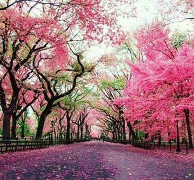 شعرهای رمانتیک زیبا درباره زندگی و زیبایی زندگی