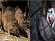 این مادر مهمانی رفت و نوزادش طعمه موش ها شد