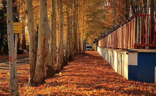 عکس های فصل پاییز و برگریزان طبیعت قزوین