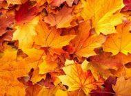 نکات سلامتی برای داشتن پاییز لذت بخش