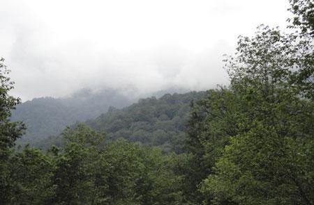 زیباترین جنگل های ایران در فصل پاییز