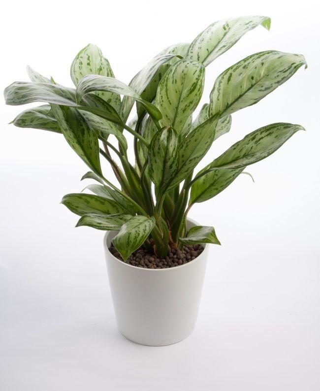 پاکسازی هوای خانه با این گیاهان آپارتمانی مفید